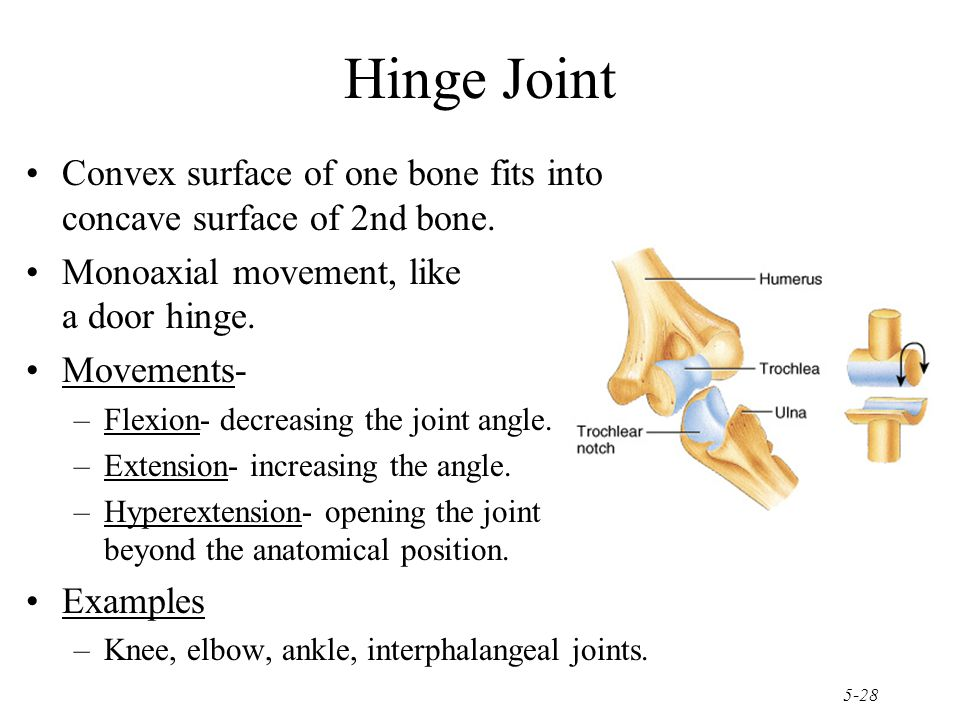 Hinge Joint Convex surface of one bone fits into concave surface of 2nd bone. Monoaxial movement, like a door hinge.