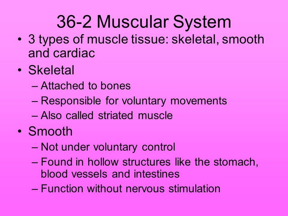 36-2 Muscular System 3 types of muscle tissue: skeletal, smooth and cardiac. Skeletal. Attached to bones.