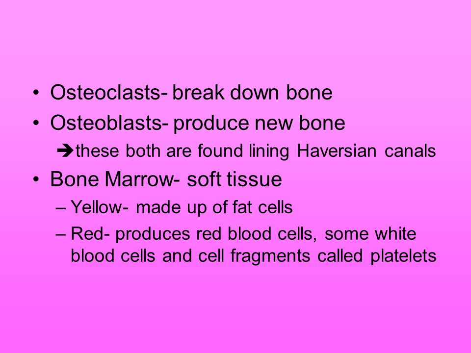 Osteoclasts- break down bone Osteoblasts- produce new bone