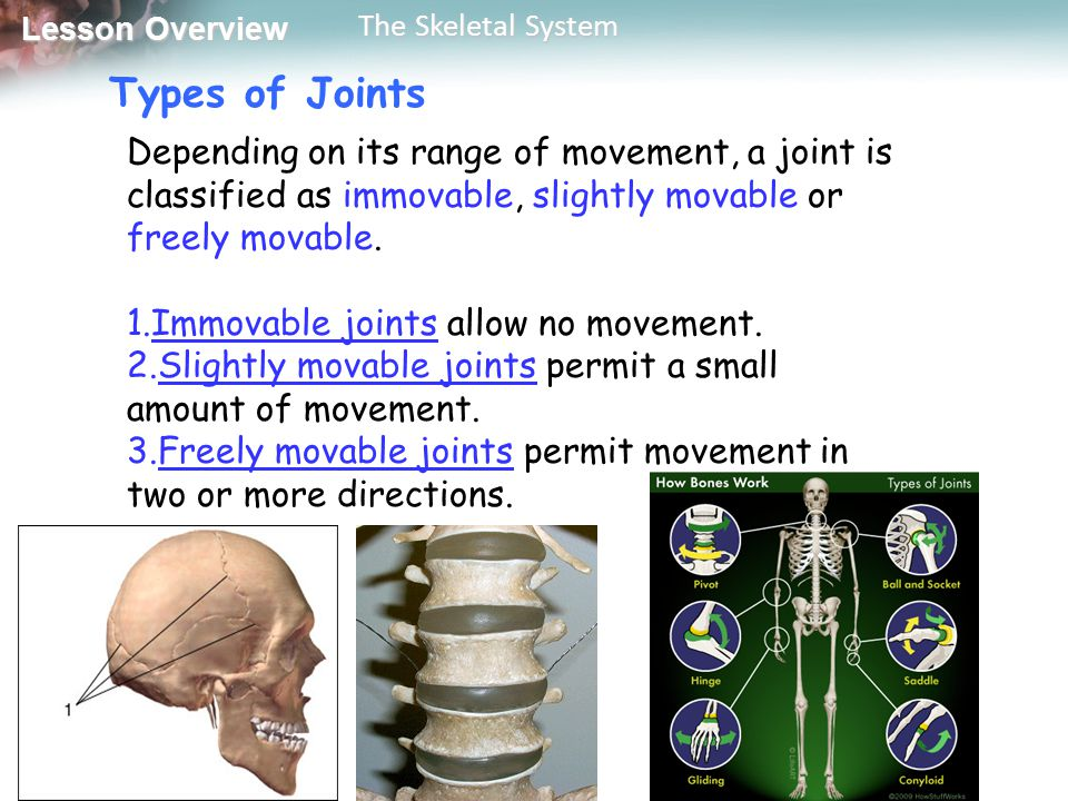 Types of Joints Depending on its range of movement, a joint is classified as immovable, slightly movable or freely movable.