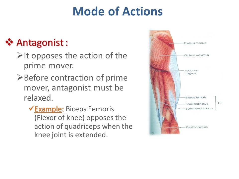 Mode of Actions Antagonist : It opposes the action of the prime mover.