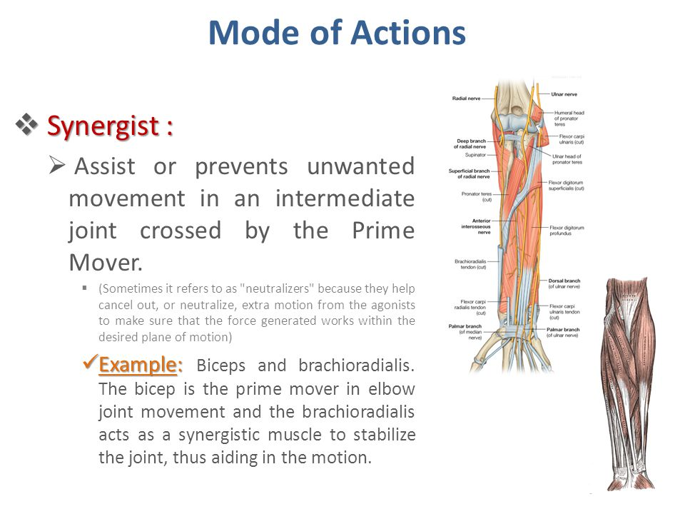 Mode of Actions Synergist :