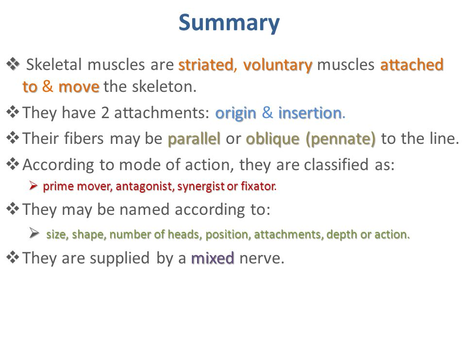 Summary Skeletal muscles are striated, voluntary muscles attached to & move the skeleton. They have 2 attachments: origin & insertion.