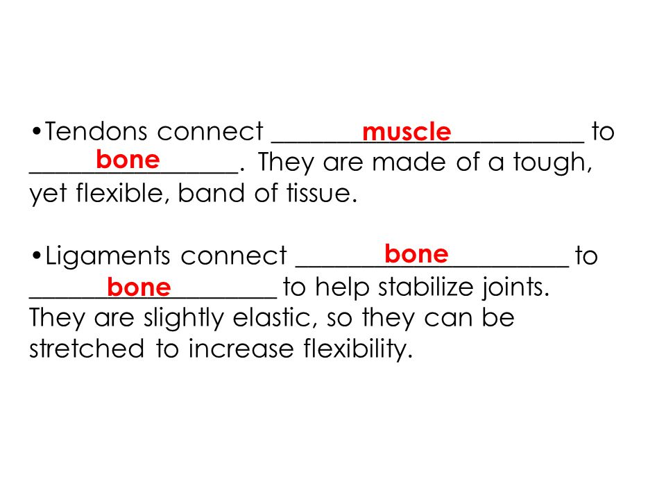 Tendons connect ________________________ to ________________