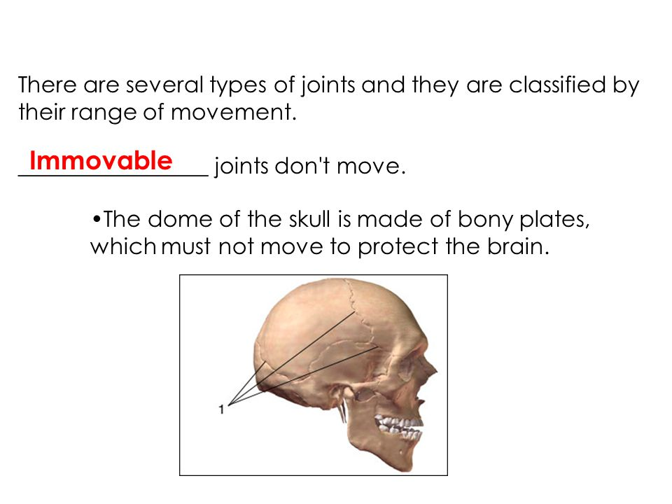There are several types of joints and they are classified by their range of movement.