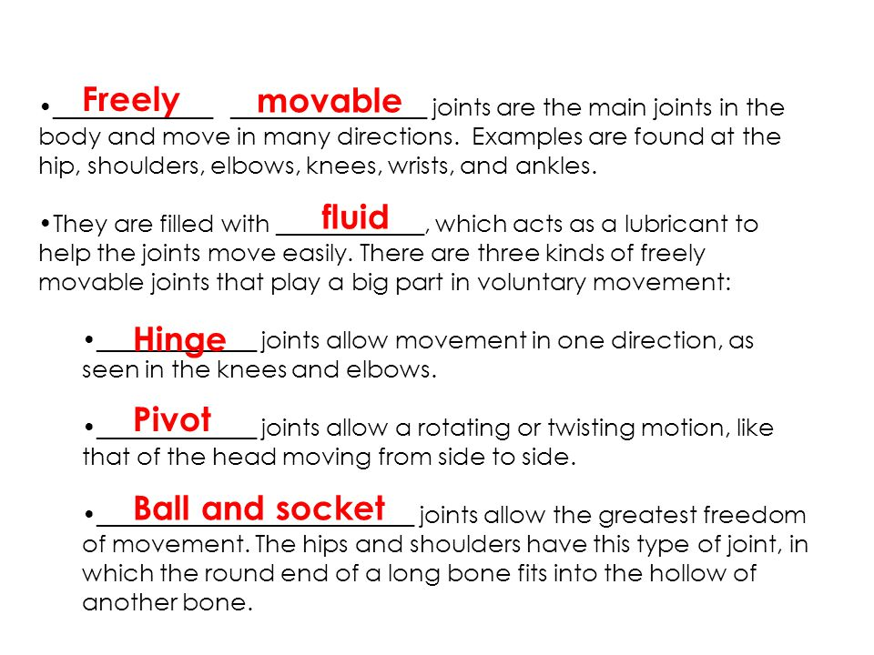 Freely movable fluid Hinge Pivot Ball and socket