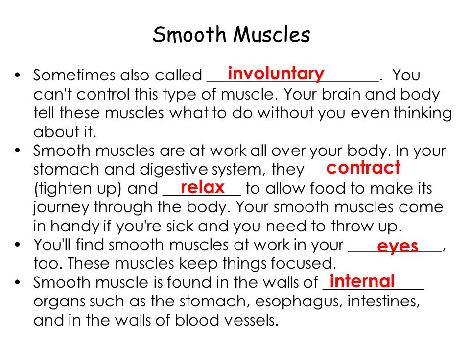 Smooth Muscles involuntary contract relax eyes internal