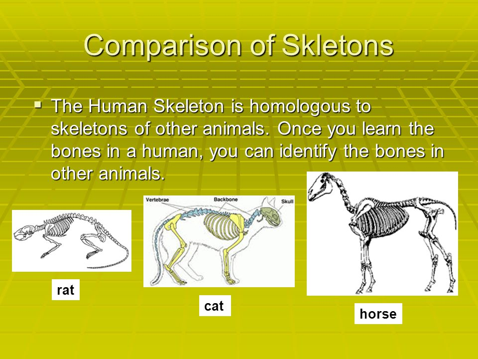 Comparison of Skletons
