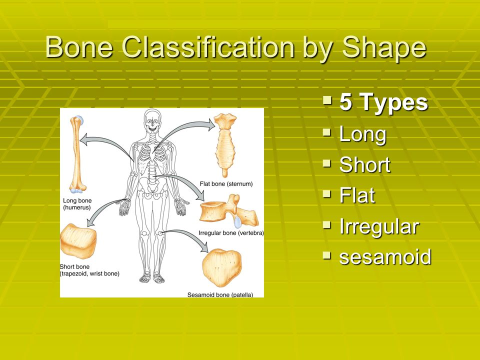 Bone Classification by Shape