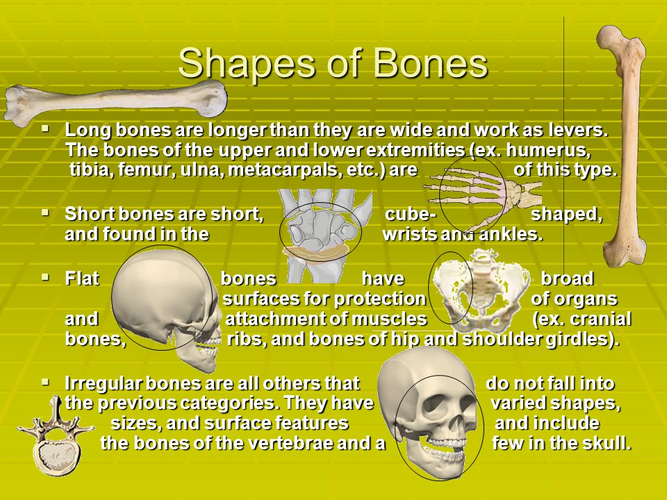 Shapes of Bones