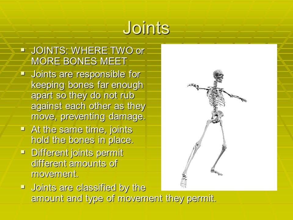 Joints JOINTS: WHERE TWO or MORE BONES MEET