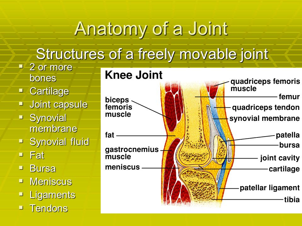 Anatomy of a Joint Structures of a freely movable joint