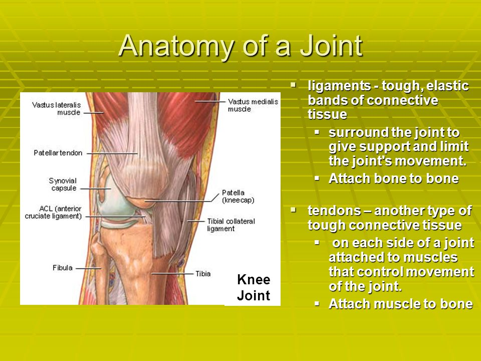 Anatomy of a Joint ligaments - tough, elastic bands of connective tissue. surround the joint to give support and limit the joint s movement.