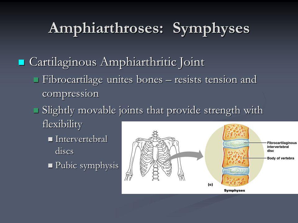 Amphiarthroses: Symphyses