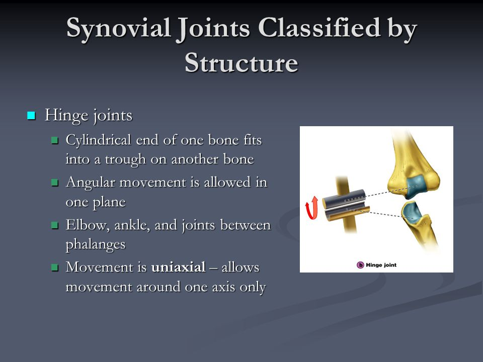 Synovial Joints Classified by Structure