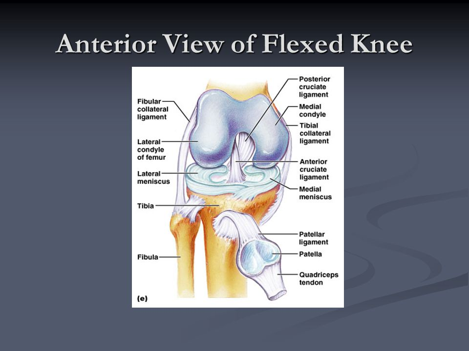 Anterior View of Flexed Knee