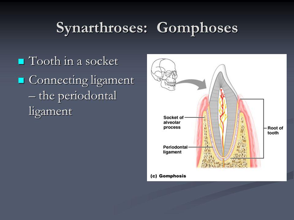 Synarthroses: Gomphoses