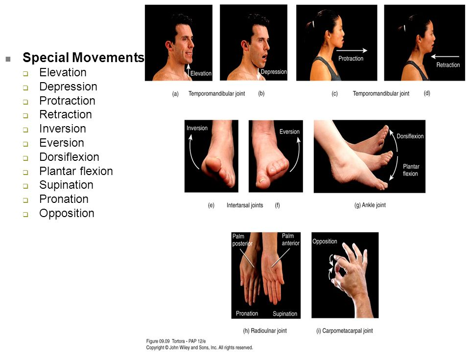 Special Movements Elevation Depression Protraction Retraction