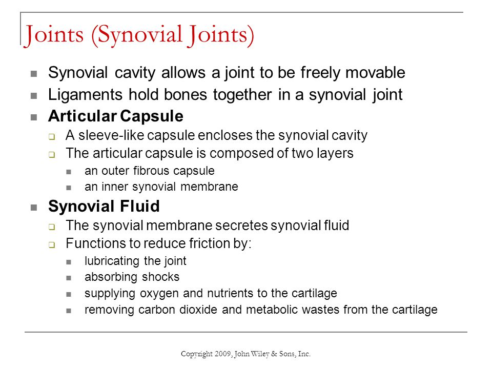 Joints (Synovial Joints)