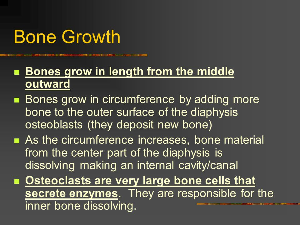 Bone Growth Bones grow in length from the middle outward