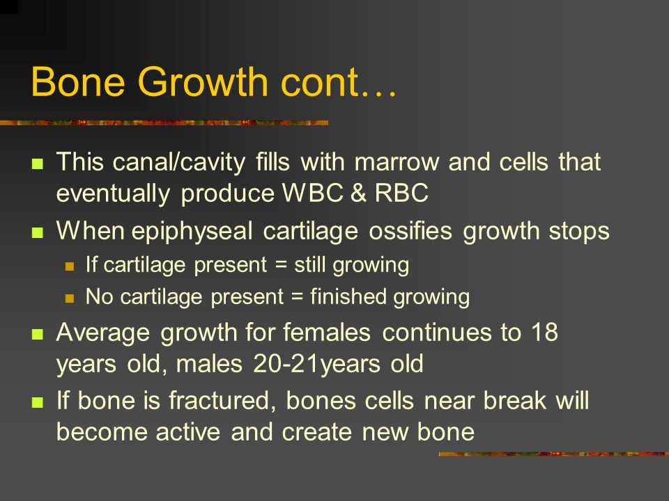 Bone Growth cont… This canal/cavity fills with marrow and cells that eventually produce WBC & RBC. When epiphyseal cartilage ossifies growth stops.
