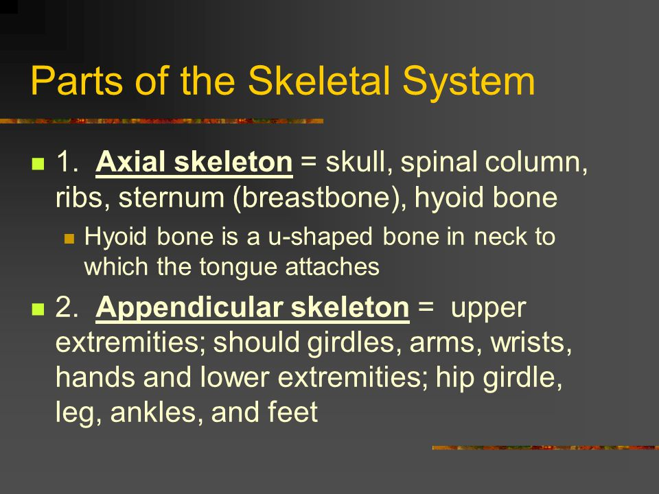 Parts of the Skeletal System