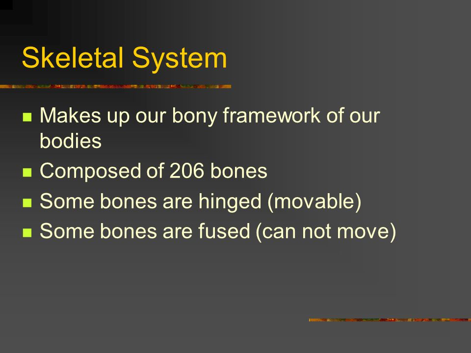 Skeletal System Makes up our bony framework of our bodies