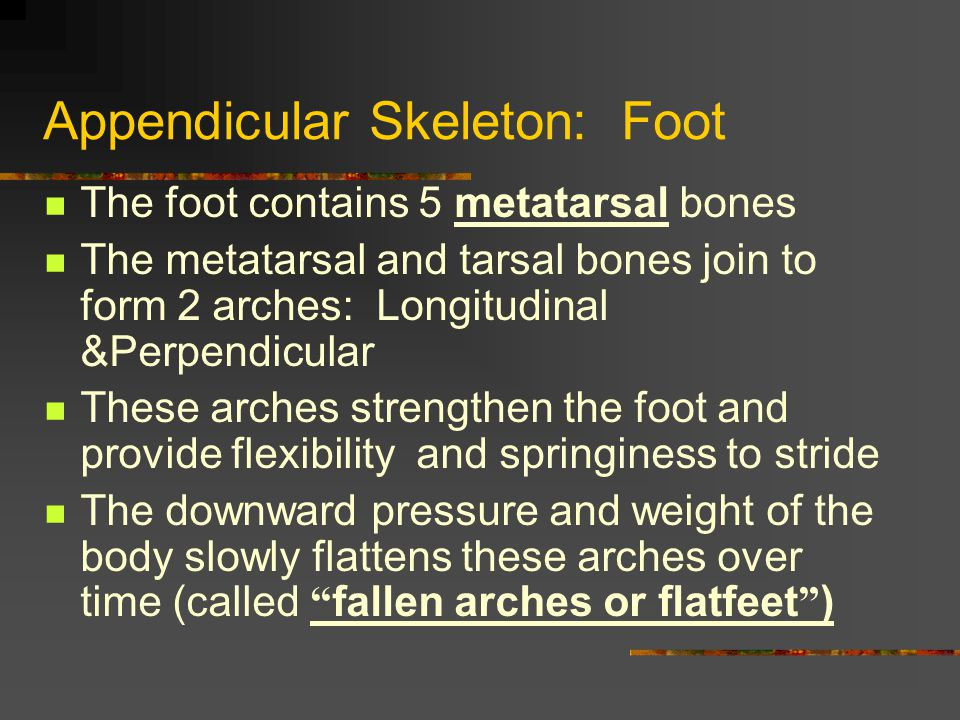Appendicular Skeleton: Foot