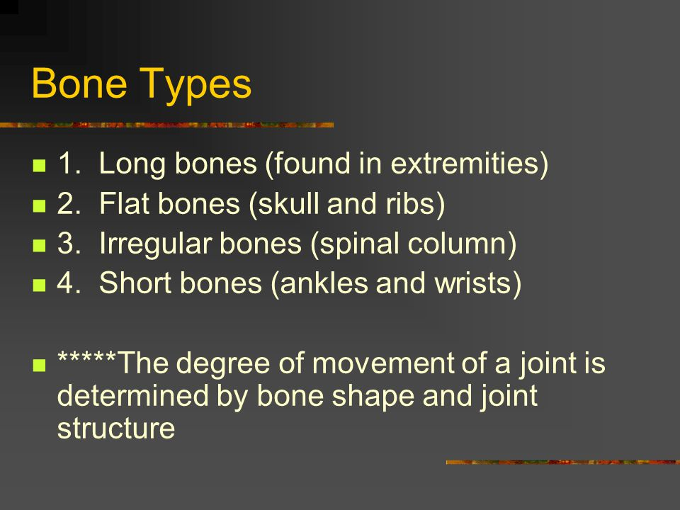 Bone Types 1. Long bones (found in extremities)