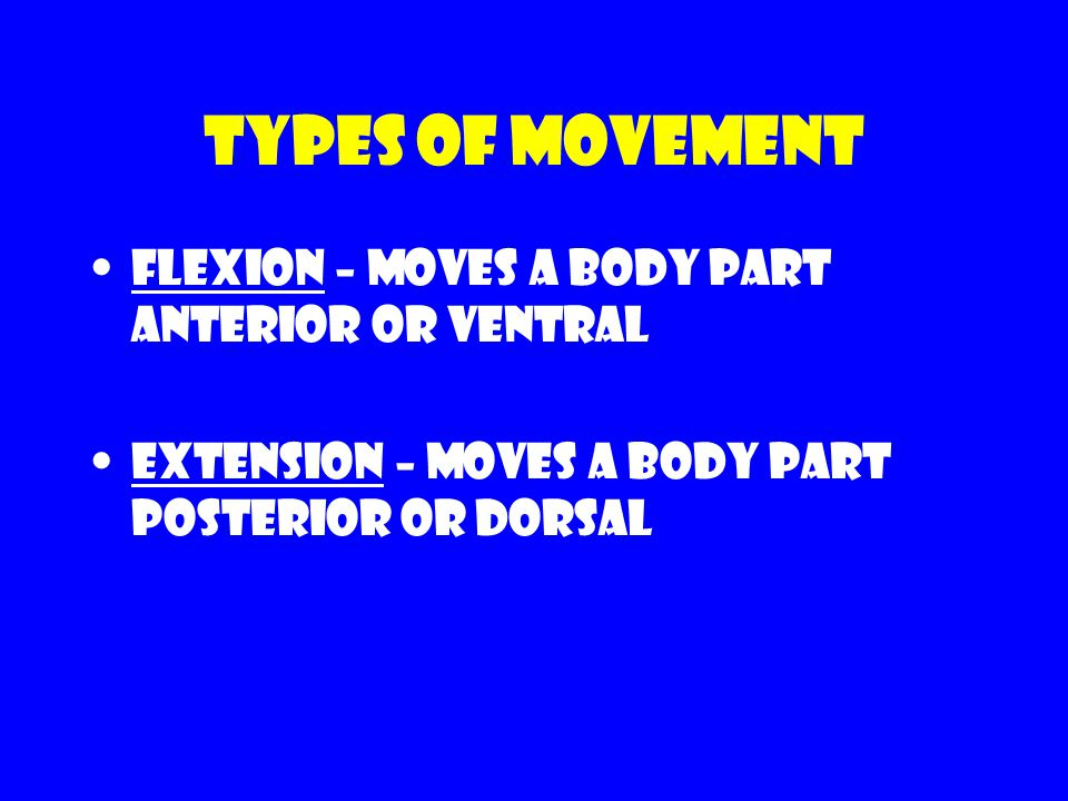 Types of movement Flexion – moves a body part anterior or ventral