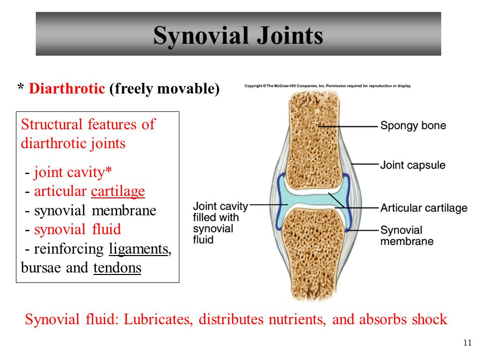 Synovial Joints * Diarthrotic (freely movable)