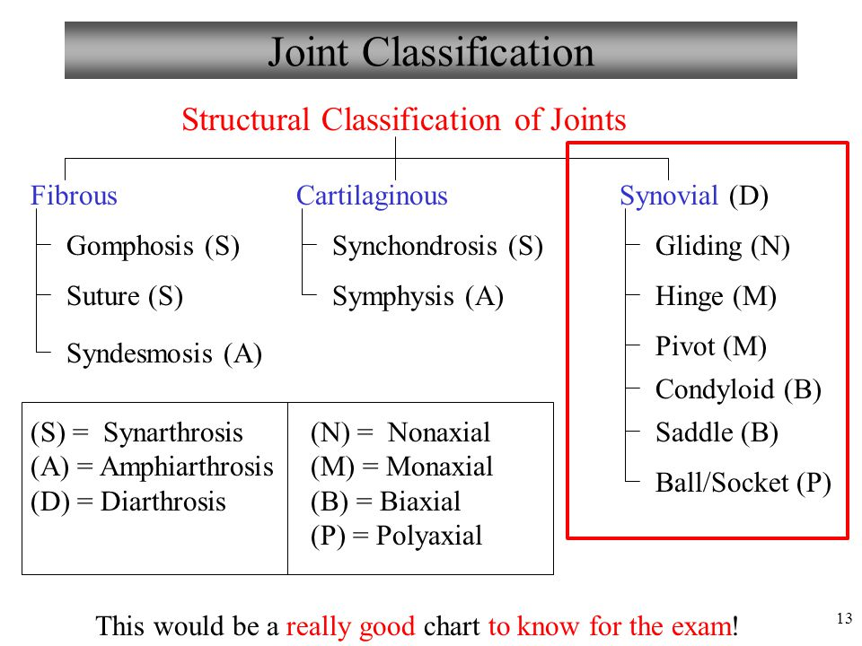 Joint Classification Structural Classification of Joints Fibrous