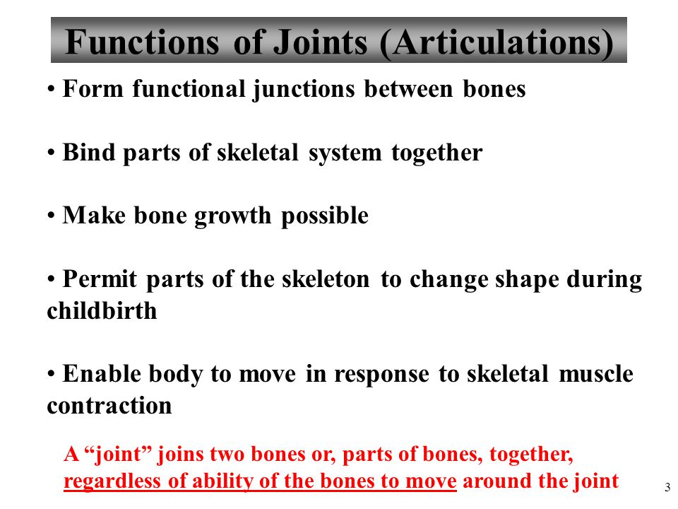 Functions of Joints (Articulations)
