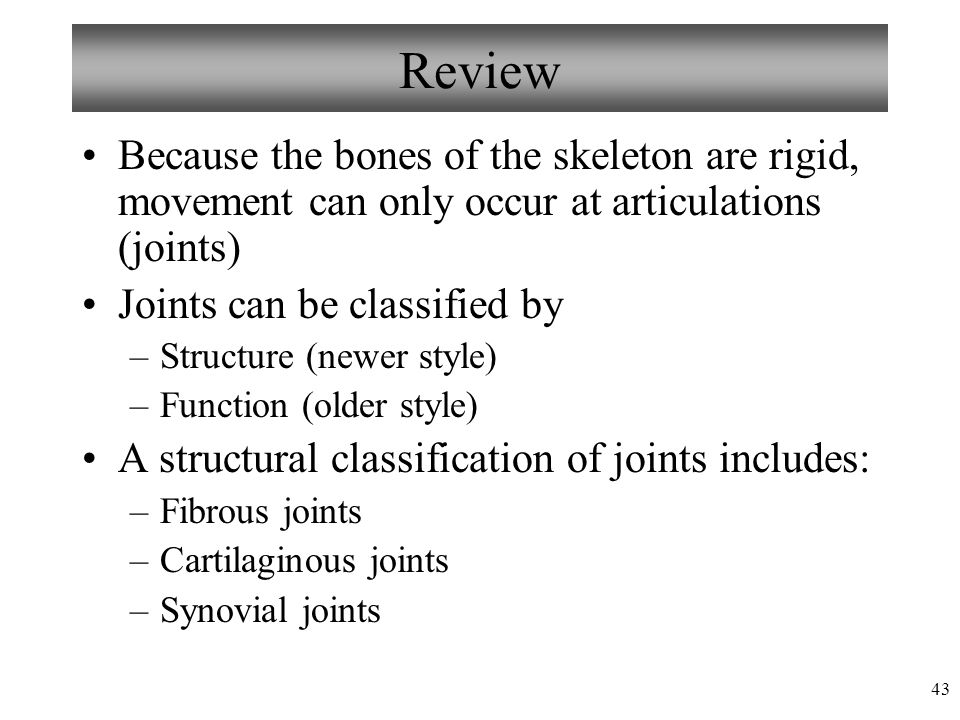 Review Because the bones of the skeleton are rigid, movement can only occur at articulations (joints)