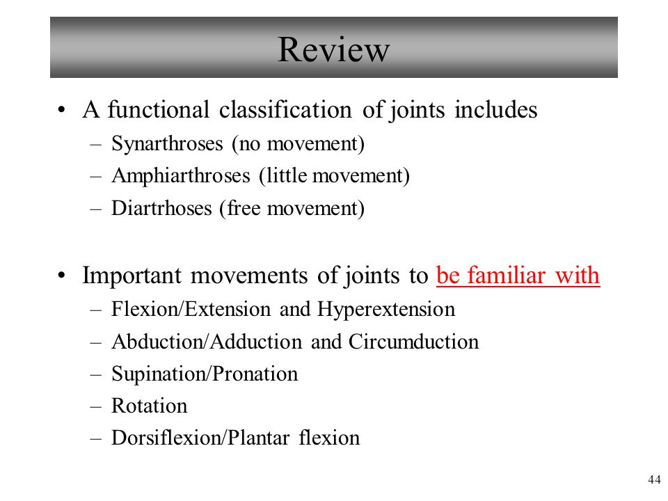 Review A functional classification of joints includes