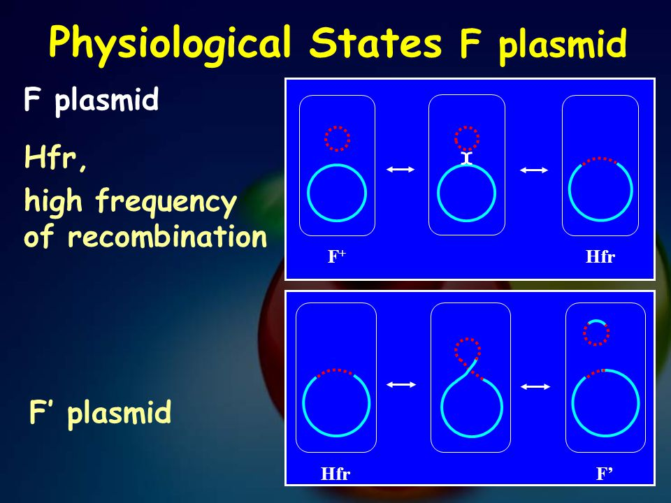 Physiological States F plasmid