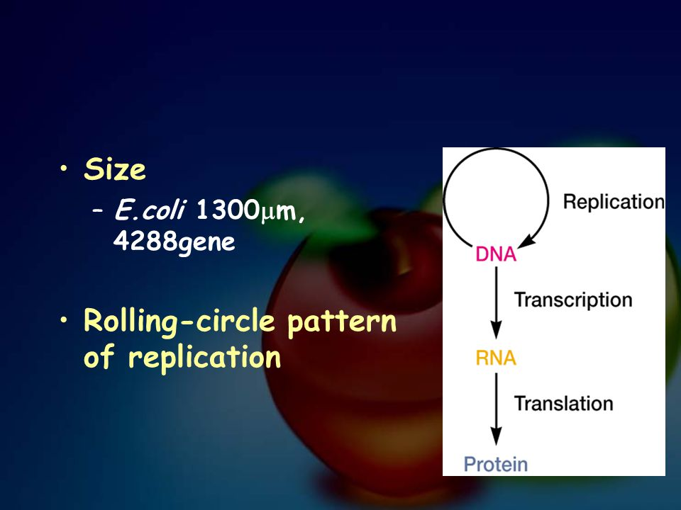 Rolling-circle pattern of replication