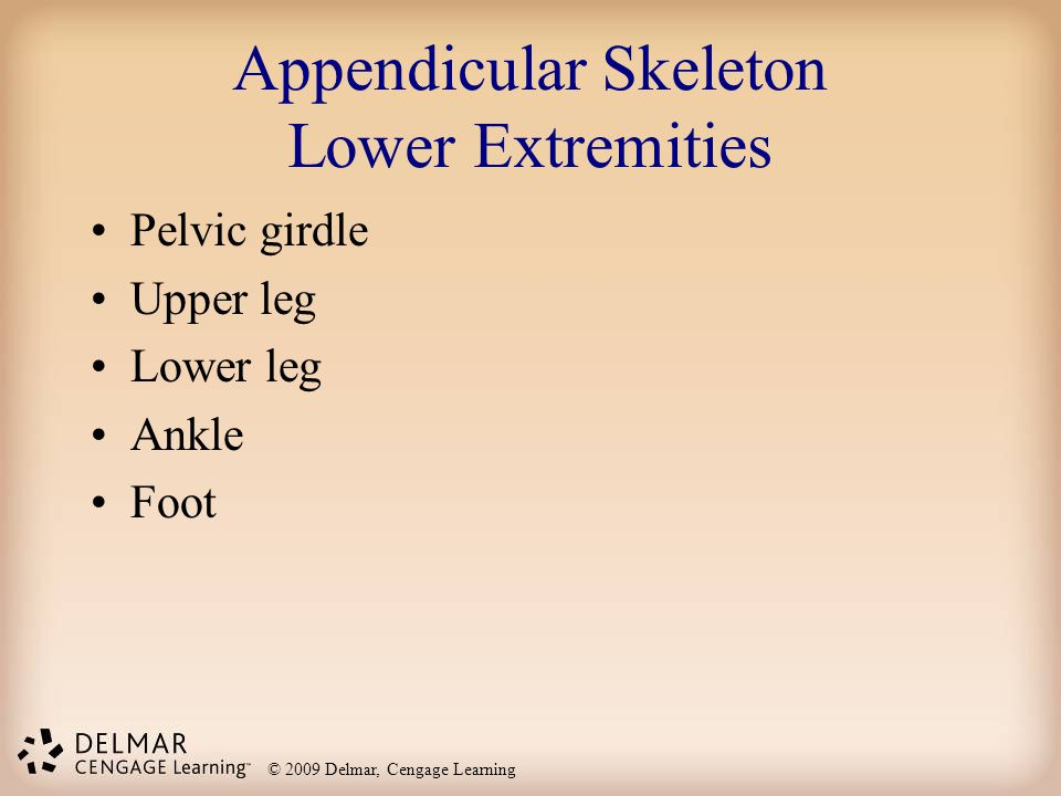 Appendicular Skeleton Lower Extremities