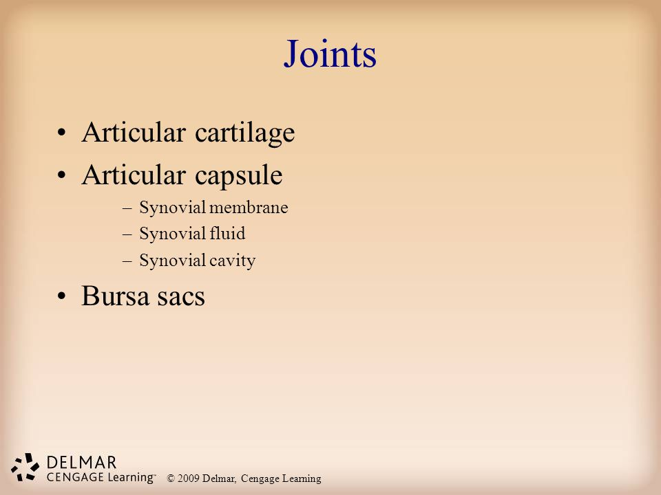 Joints Articular cartilage Articular capsule Bursa sacs