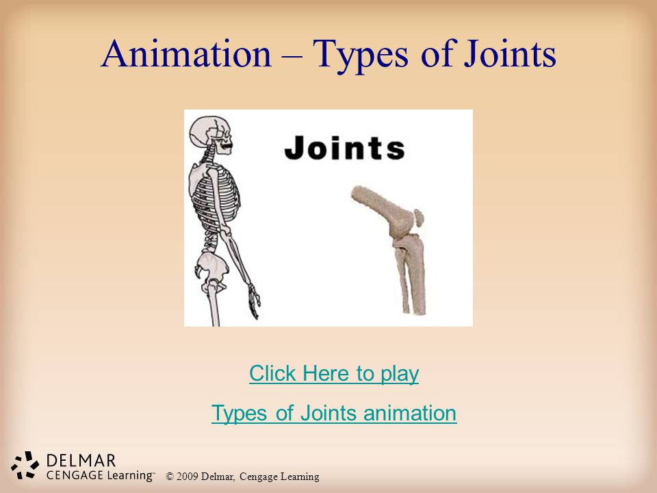 Animation – Types of Joints