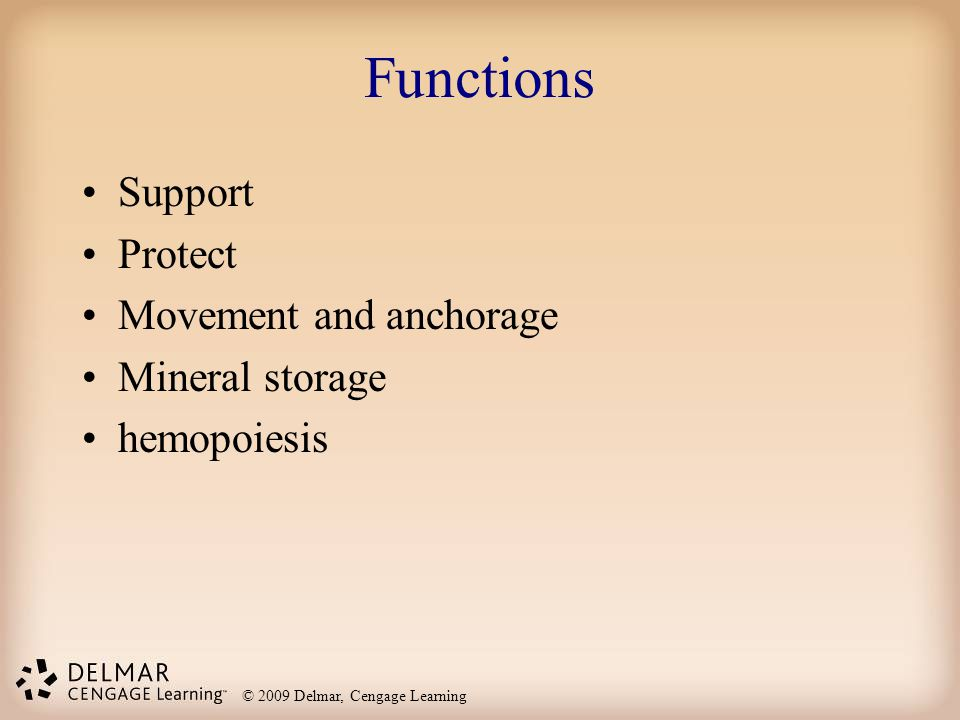 Functions Support Protect Movement and anchorage Mineral storage