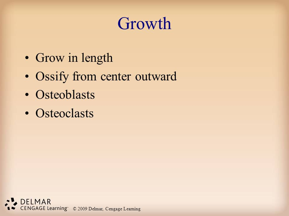Growth Grow in length Ossify from center outward Osteoblasts
