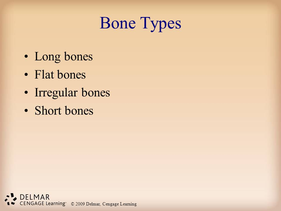 Bone Types Long bones Flat bones Irregular bones Short bones