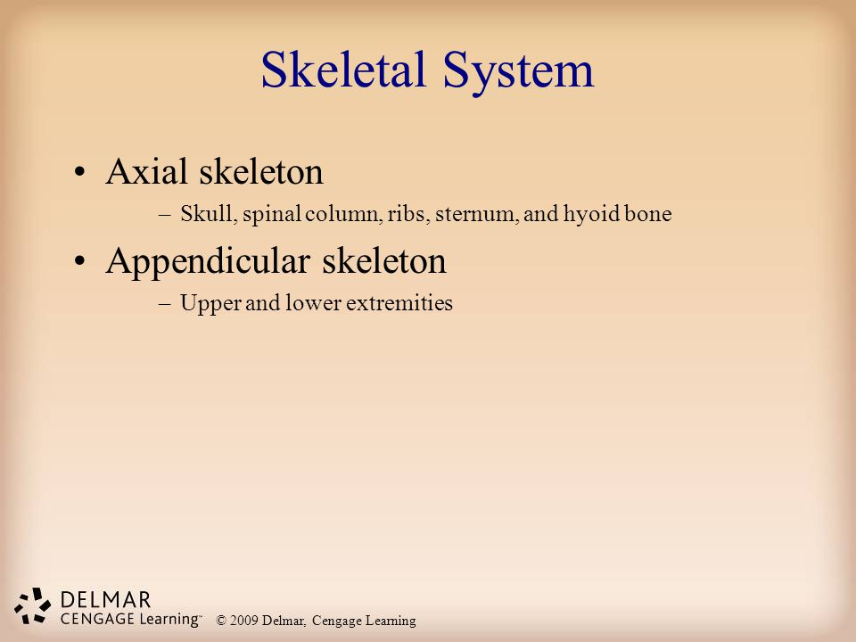 Skeletal System Axial skeleton Appendicular skeleton