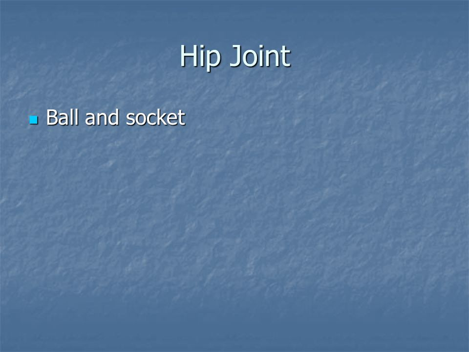Hip Joint Ball and socket