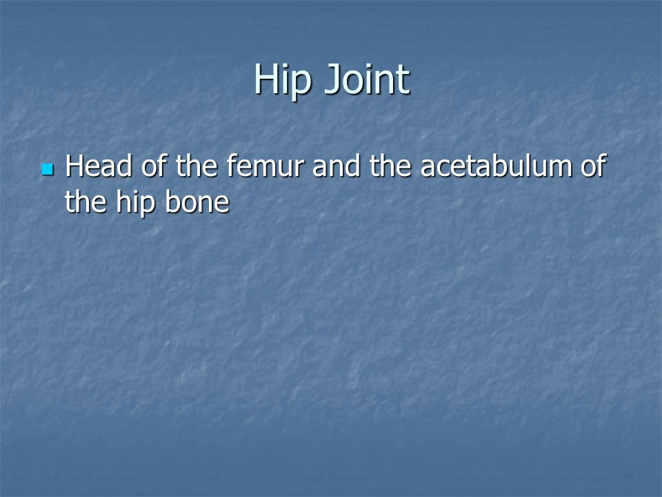 Hip Joint Head of the femur and the acetabulum of the hip bone