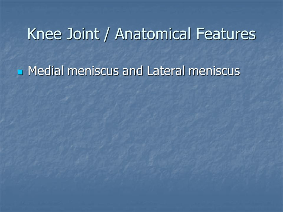 Knee Joint / Anatomical Features