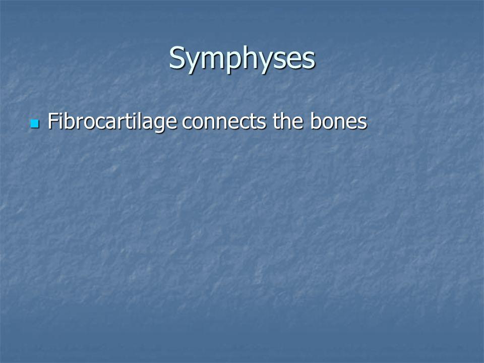 Symphyses Fibrocartilage connects the bones