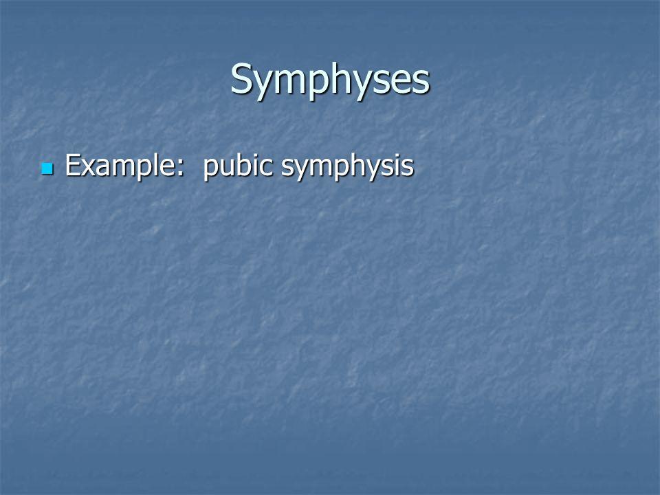 Symphyses Example: pubic symphysis