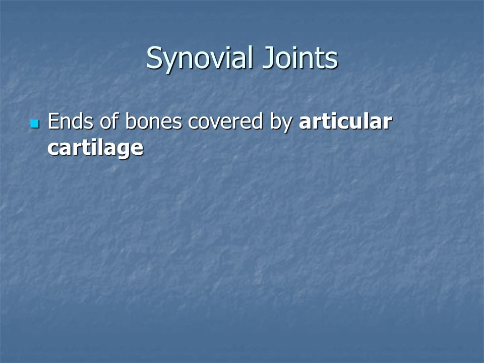 Synovial Joints Ends of bones covered by articular cartilage
